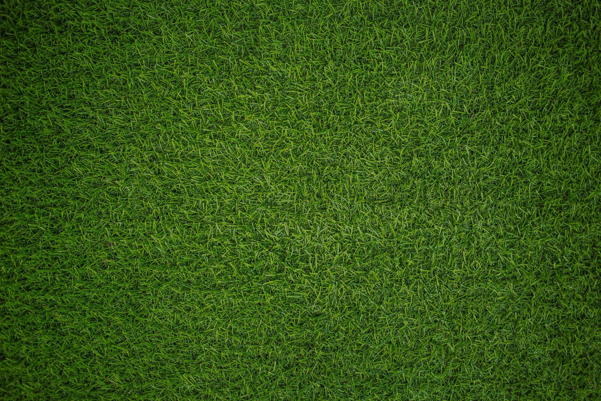 græsplæne bumperballs