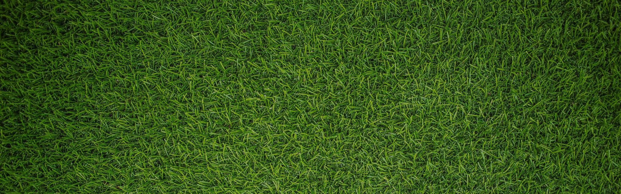 bumperballs græsplæne